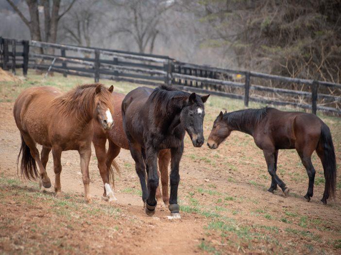 Rescuing Slaughter-Bound Horses The Mad Turkey Farm - Virginia Animal Rescue Farm