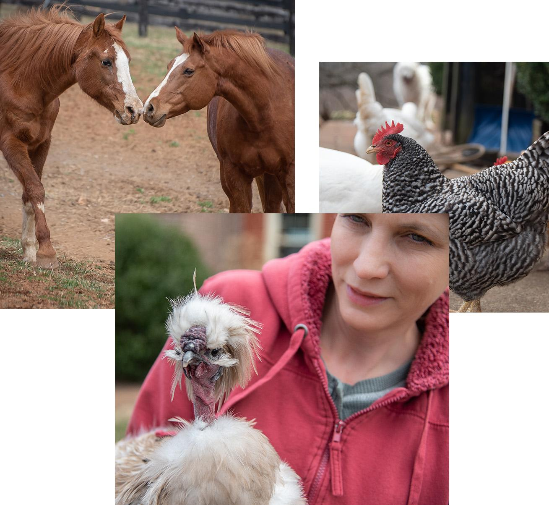 Virginia Animal Rescue - The Mad Turkey Farm